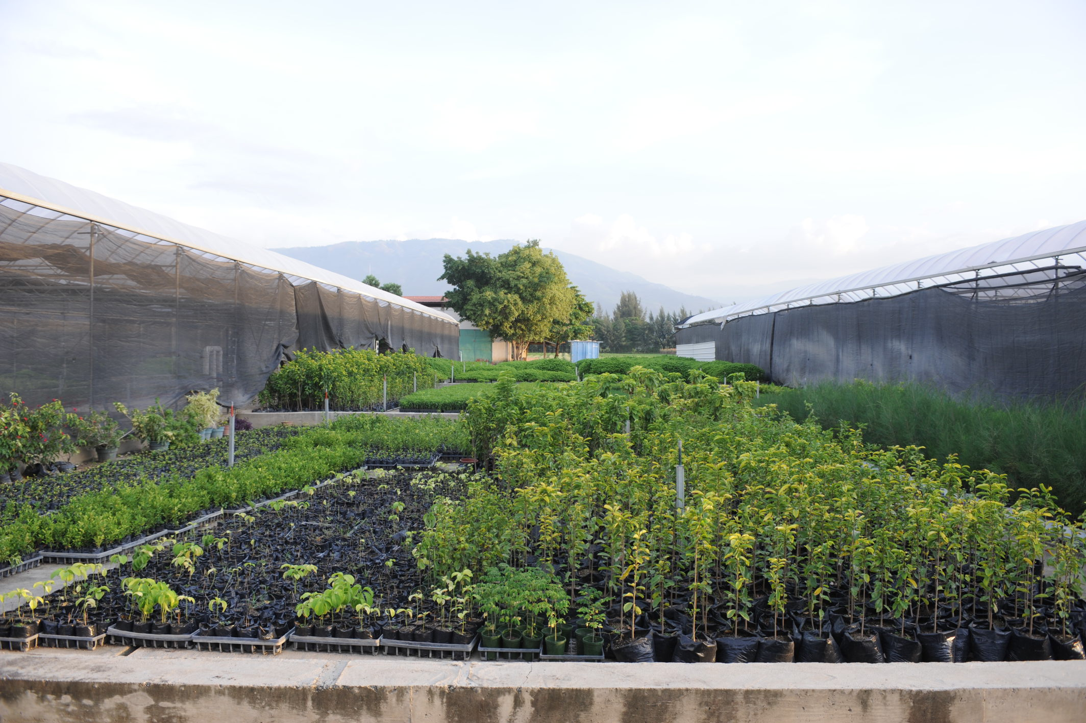Reforestation Trees and Greenhouses