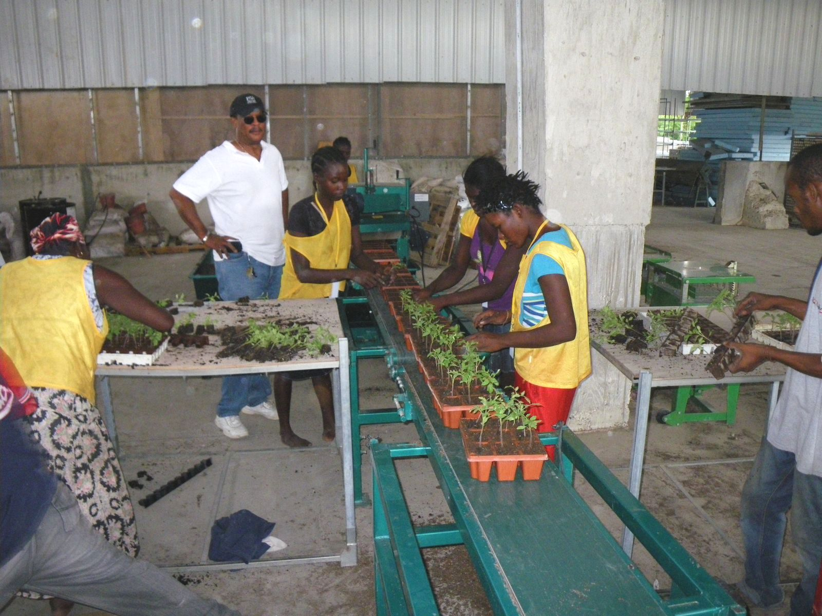 Employees Transplanting Tomatoes