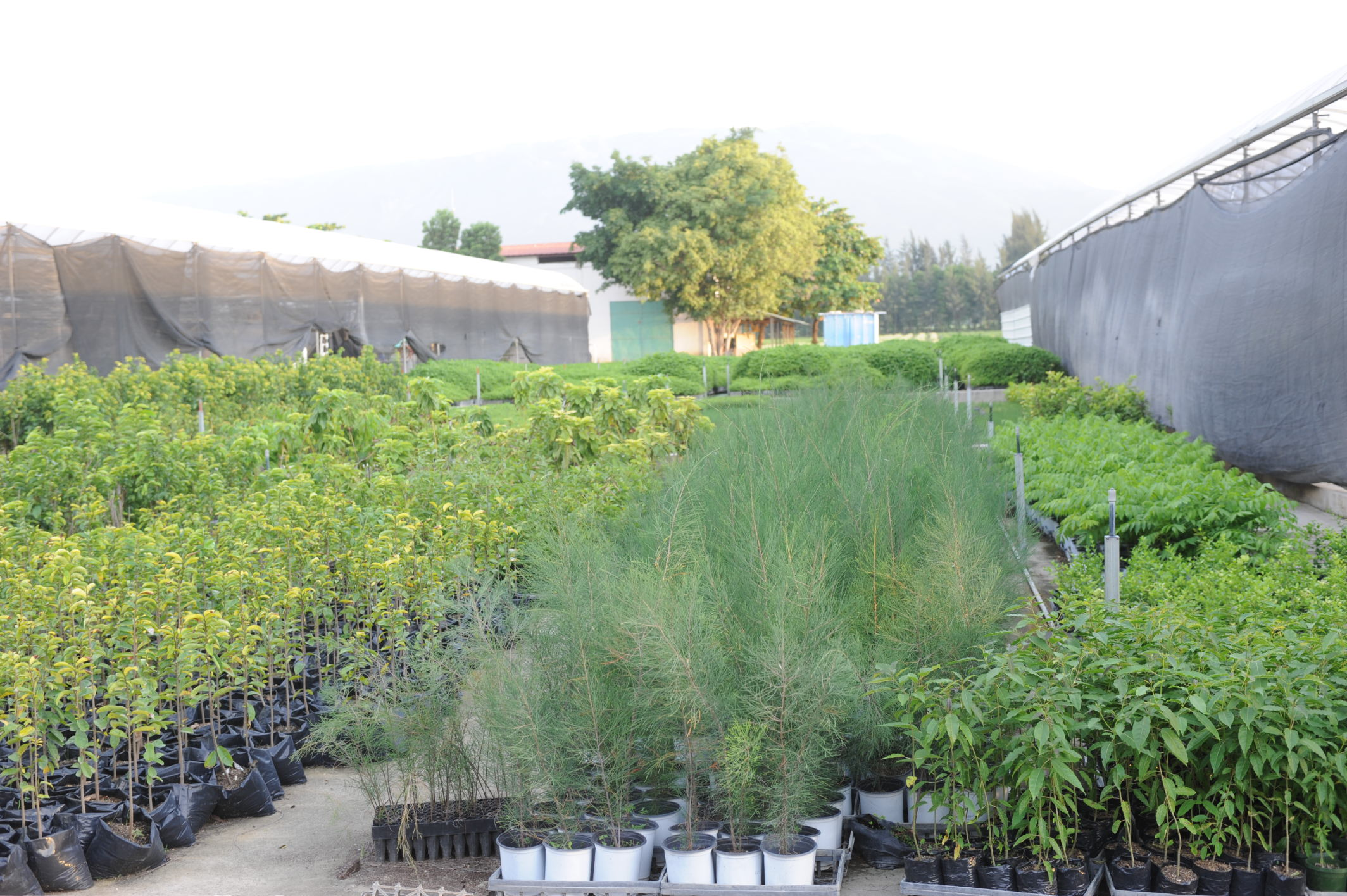 Tree Seedlings for Reforestation