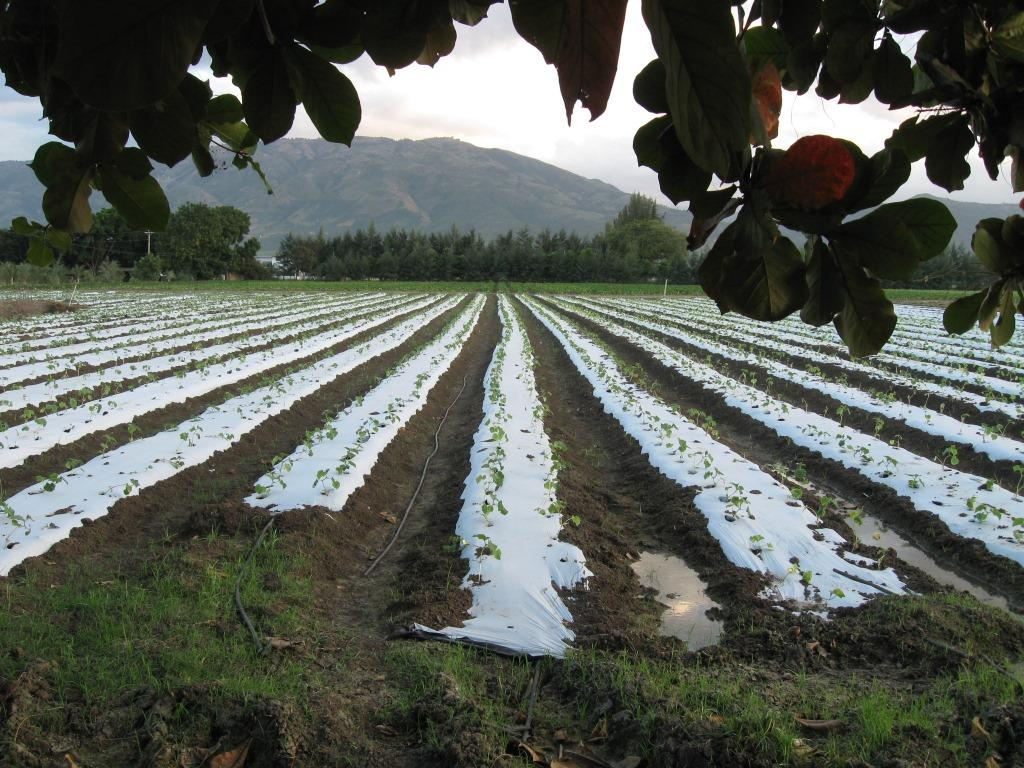 Drip Irrigation For Vegetables
