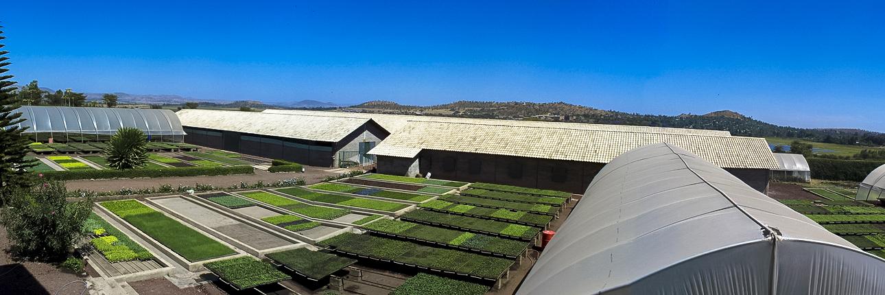 Genesis Farms Ethiopia