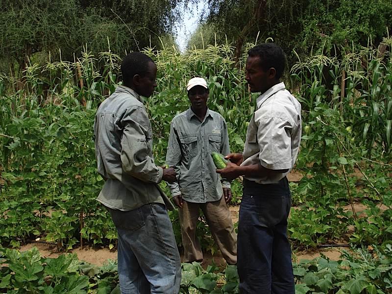 Behailu's Follow Up with Two Genesis Farm Interns
