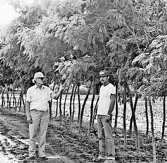 Aart van Wingerden examining trees