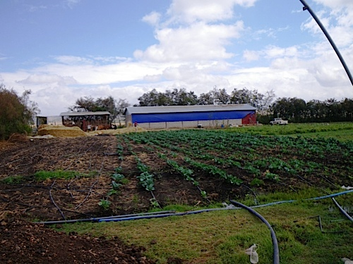 Zion Farm