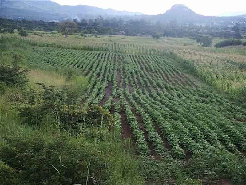 Victory Farms fertile fields