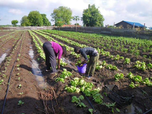 South Sudan Farm